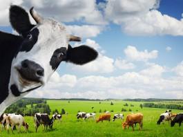 potpora male vrijednosti u poljoprivredi